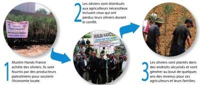 Autonomie_oliviers_palestine